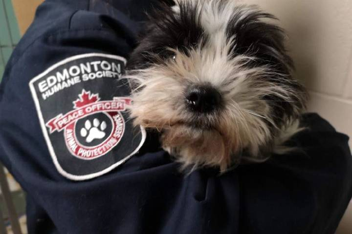 Edmonton Humane Society hopes to ID owner of 'neglected dog' found in garbage bag