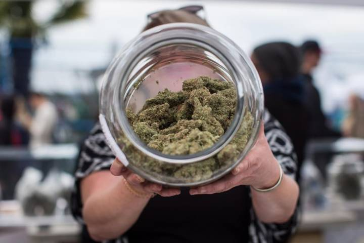 Merry marijuana: Manitoba and Alberta most likely to gift pot for Christmas this year, survey says