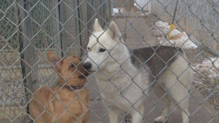 Rural Alberta shelters experiencing increase in abandoned animals