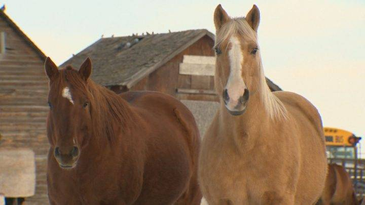 Alberta horse rescue group believes 2019 could be its busiest year yet