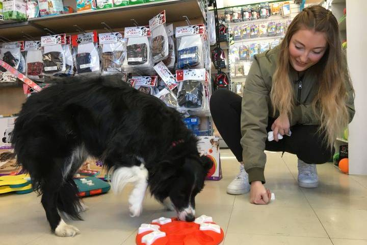 Calgary cold snap has dogs trying indoor puzzles: 'Better than chewing the leather furniture'