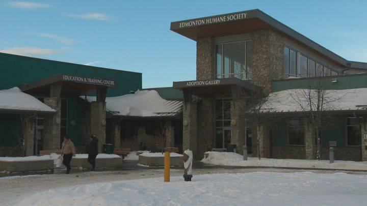 Former Bissell Centre executive becomes new CEO of Edmonton Humane Society