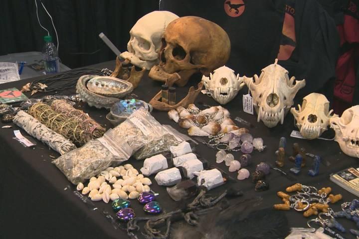 Jackalope, 2-headed cow skull among oddities stolen between Vancouver and Edmonton shows