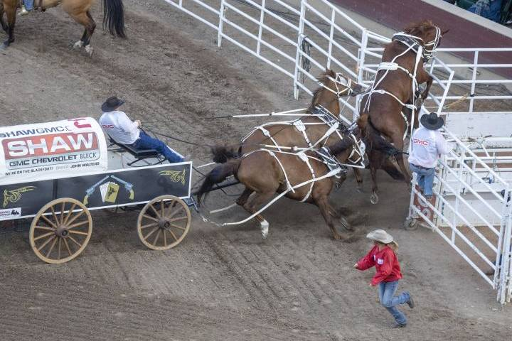 Horse injured at Calgary Stampede's 'half mile of hell' Friday night