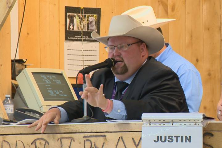 Livestock auctioneers compete for international championship title in Alberta