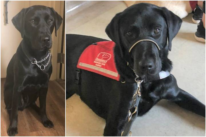 Meet the dog tasked with helping victims of traumatic crime in Airdrie