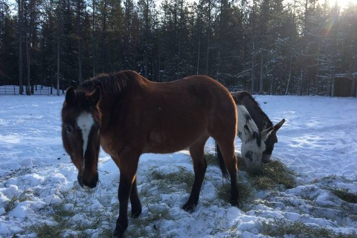 Calgary-area horse sanctuary at capacity; founder concerned about fate of Alberta wild horses in 2020
