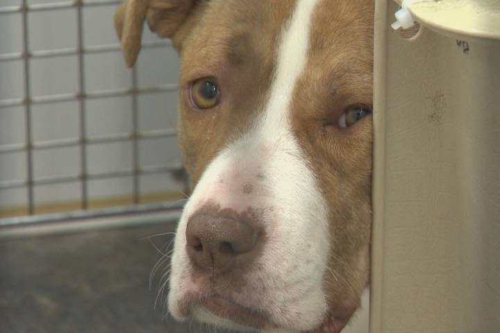 Alberta animal shelter at capacity because of extreme cold weather