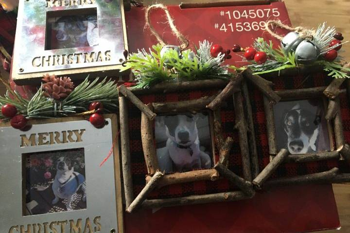 Calgary family grieves deaths of 4 dogs in house fire, thanks community for support