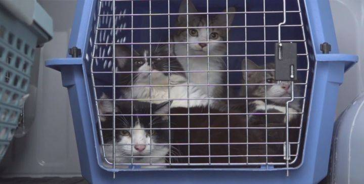 143 cats removed from Edmonton-area home since December