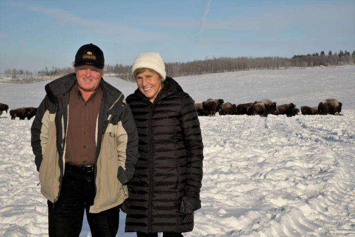 Alberta's Lakeland College gets $4M gift from ranchers to buy land, establish bison herd