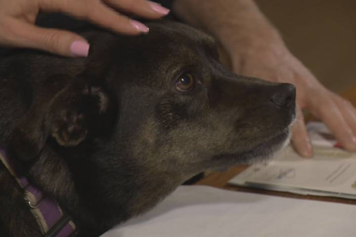 Dog owner says he paid over $6,000 in pet insurance but only reimbursed $15.60