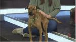 SCARS adoptable pets: Saturday, Feb. 29