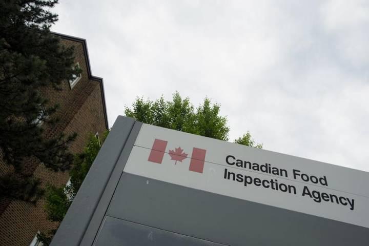 Federal meat inspectors union seeks safety guarantee amid coronavirus pandemic