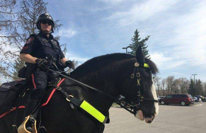 Police on horseback target busy Calgary parks, watch for physical distancing amid COVID-19