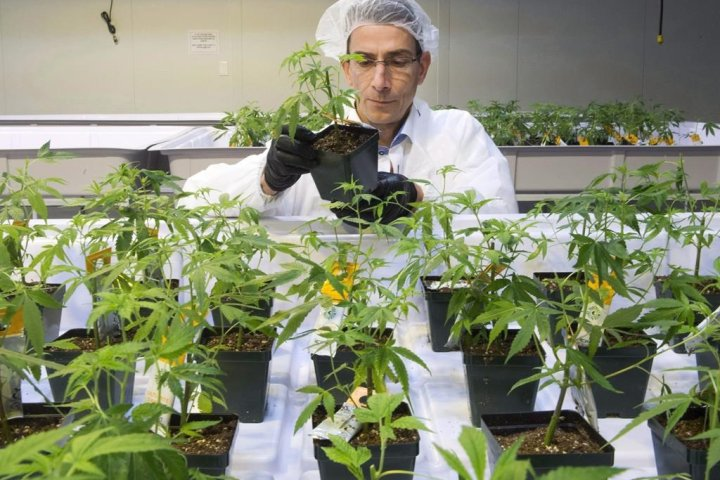 Aurora Cannabis to cut jobs in Europe