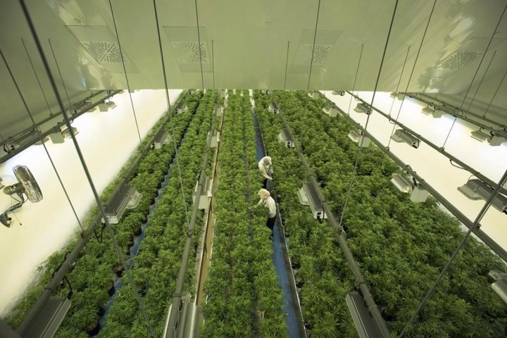 Canopy Growth to open 10 cannabis retail stores in Alberta