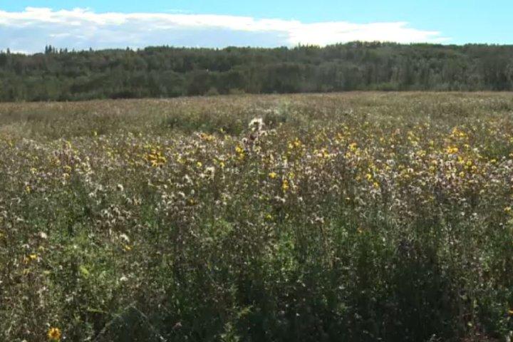 Edmonton city council votes 7-6 to allow large solar farm project to go ahead