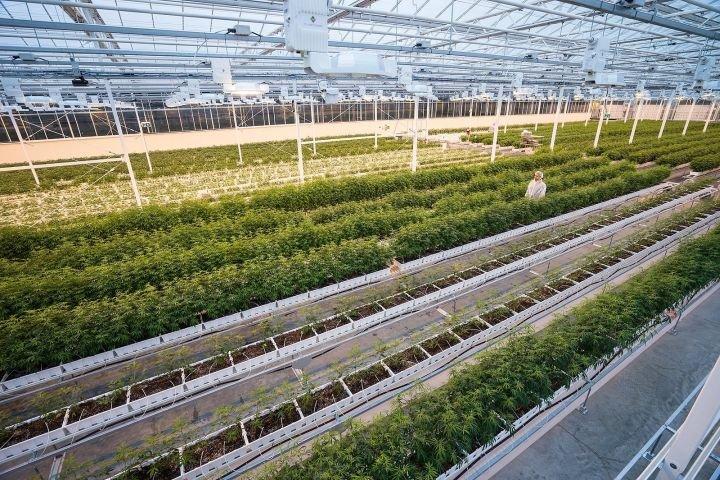 Aurora Cannabis reducing workforce at Edmonton-area facility