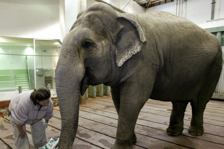 Jane Goodall adds voice to calls to move Lucy the elephant from Edmonton