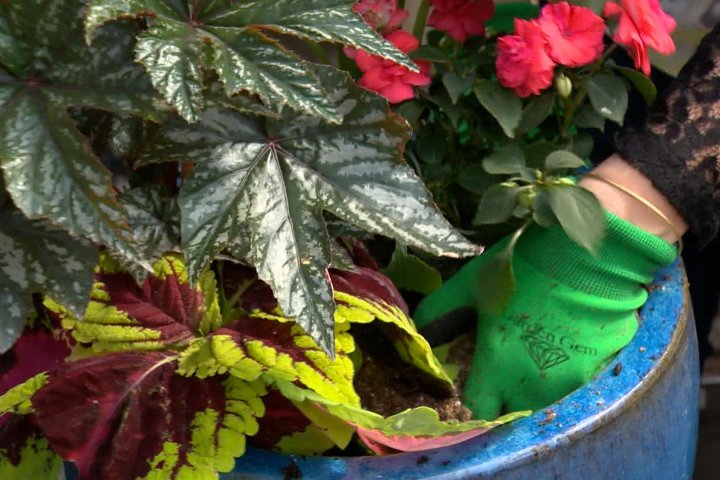 Plant boom: Working from home, pandemic stress has people turning green