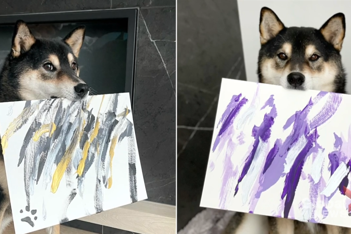 Paintings by Alberta dog bringing 'joy and happiness' to people around the world
