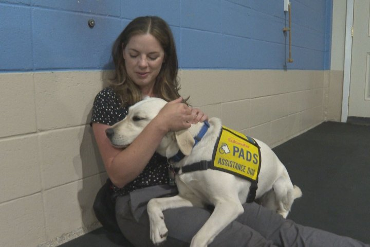 Alberta service dog agency ramps up training to catch up with COVID-19 backlog