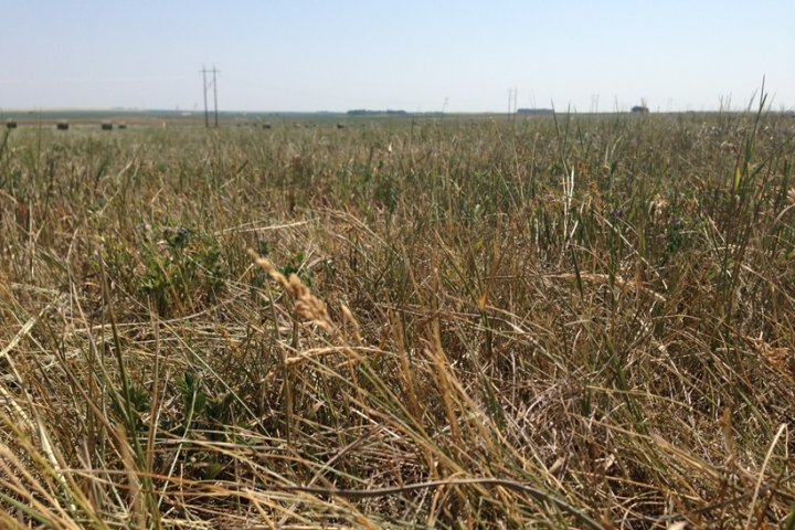 Alberta to provide $340M for ranchers after drought-laden summer