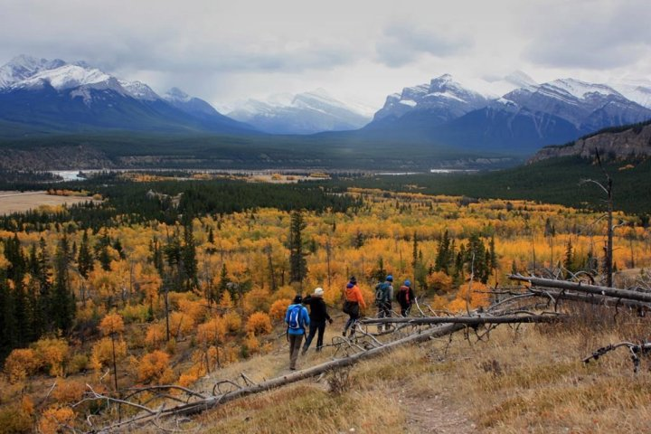 Albertans want overall policy on Rocky Mountain development: coal committee