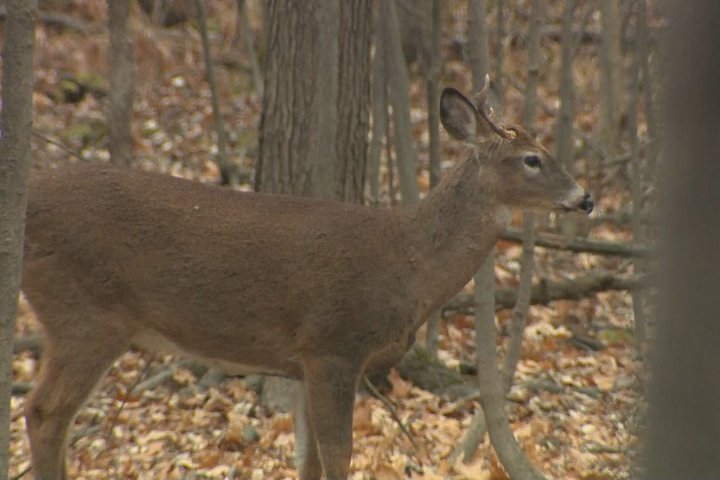 Cellphone leads to hefty Saskatchewan hunting fines for Alberta couple
