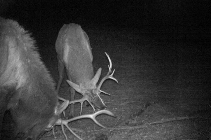Trail cameras in Crowsnest Pass tracking wildlife behaviour near Highway 3
